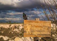 Vallée de pigeon, Cappadocia Turquie Photo libre de droits