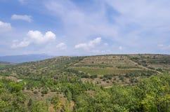 Vallée de raisins sous un ciel bleu avec les nuages blancs Images libres de droits