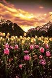 Vallée de tulipe Photo stock