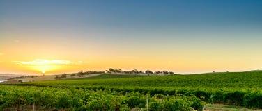 Vallée de vin au coucher du soleil Image libre de droits