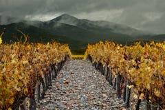 Vallée de vin de Catalogne Image libre de droits