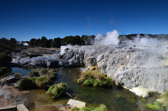 Vallée de Whakarewarewa des geysers dans nouveau Zelandii Parc de Geotermalny Photo stock