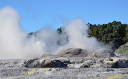 Vallée de Whakarewarewa des geysers dans nouveau Zelandii Parc de Geotermalny Images libres de droits