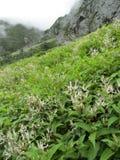 Vallée des fleurs Photo stock