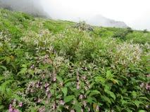 Vallée des fleurs Image libre de droits