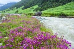 Vallée des fleurs, Inde photographie stock