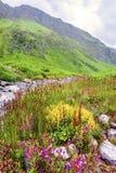 Vallée des fleurs, Inde d'uttarakhand images stock