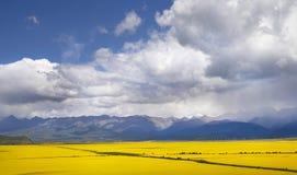 Vallée des fleurs jaunes Photo stock