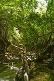 Vallée des guindineaux Photographie stock libre de droits