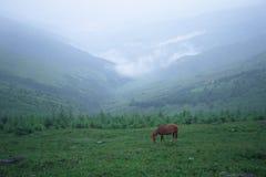 Vallée en brouillard Photo libre de droits