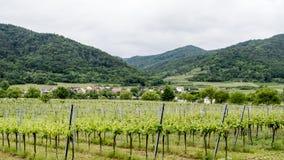 Vallée européenne de vin Photographie stock libre de droits