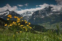 Vallée Grindelwald, Suisse Image libre de droits
