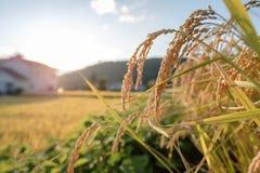 Vallée japonaise au début d'automne Photo stock