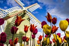 Vallée Orégon Tulip Fields de Skagit Photo stock