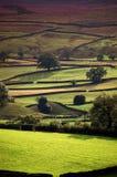 Vallées de Yorkshire en soleil de soirée Image stock