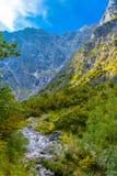 Vall?e de montagnes pr?s de Koenigssee, Konigsee, parc national de Berchtesgaden, Bavi?re, Allemagne image stock