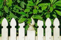 Valla de estacas blanca demasiado grande para su edad por un arbusto grande imágenes de archivo libres de regalías