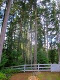Valla de estacas blanca que lleva a un bosque hermoso Imagen de archivo libre de regalías
