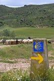 Valla med flocken av får i naturligt landskap Arkivbild