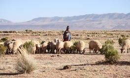 Valla och flocken av får, bolivianska Altiplano Royaltyfria Bilder