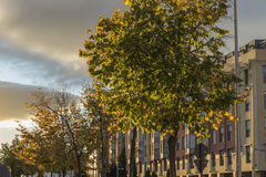 Valladolid I walk with trees Stock Photography