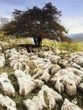 Vallate del Yorkshire Fotografia Stock Libera da Diritti
