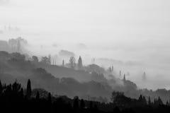 Valle, alberi e nebbia Fotografia Stock