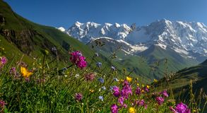 Valle alpina Fotografie Stock