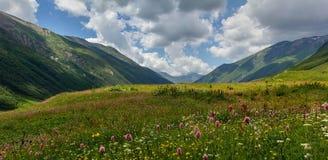 Valle alpina Immagini Stock