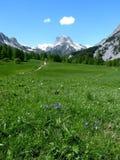 Valle alpina verde, supporto Thabor, Francia Immagine Stock