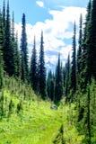 Valle alpino con los árboles Fotos de archivo libres de regalías
