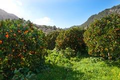 Valle arancio Immagini Stock