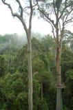 Valle Borneo de Danum de la calzada del toldo de la copa Foto de archivo