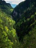 Valle, bosque, hermosa vista, naturaleza pura, Tatras del oeste, Eslovaquia Fotografía de archivo