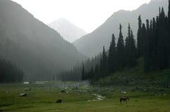 Valle brumoso Foto de archivo libre de regalías