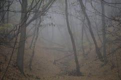 Valle brumoso Imagen de archivo