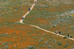 Valle California Poppy Reserve del antílope Foto de archivo libre de regalías