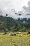 Valle Chulyshman Fotografia Stock
