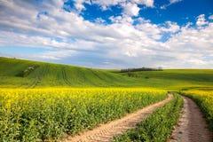 Valle colorido - campos florecientes amarillos y overloo de tierra del camino Foto de archivo