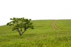 Valle con el árbol y el carril Fotos de archivo