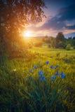Valle con i fiori irlandesi in un'erba Fotografia Stock Libera da Diritti