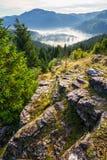 Valle con la foresta della conifera in pieno di nebbia in montagna Fotografia Stock Libera da Diritti