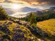 Valle con la foresta della conifera in pieno di nebbia in montagna al tramonto Fotografia Stock Libera da Diritti