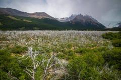 Valle con los árboles blancos en las montañas Shevelev Fotos de archivo