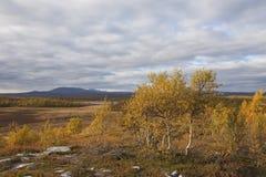 Valle con los árboles de abedul en caída Fotografía de archivo