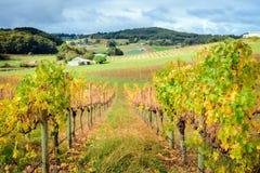 Valle de Autumn Wine Imagenes de archivo