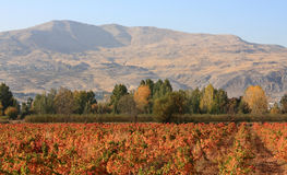 Valle de Beqaa, Líbano Foto de archivo