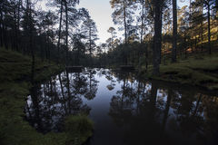 Valle de Bravo Floresta imagem de stock royalty free
