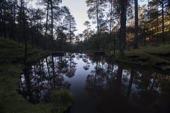 Valle de Bravo Forest Immagine Stock Libera da Diritti