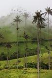 Valle de Cocora Imagenes de archivo